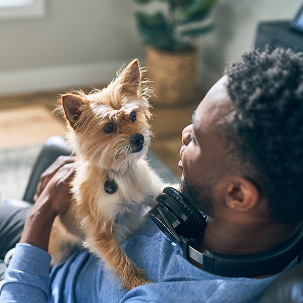 African-American man in blue sweater wearing headphones holds small dog in lap.